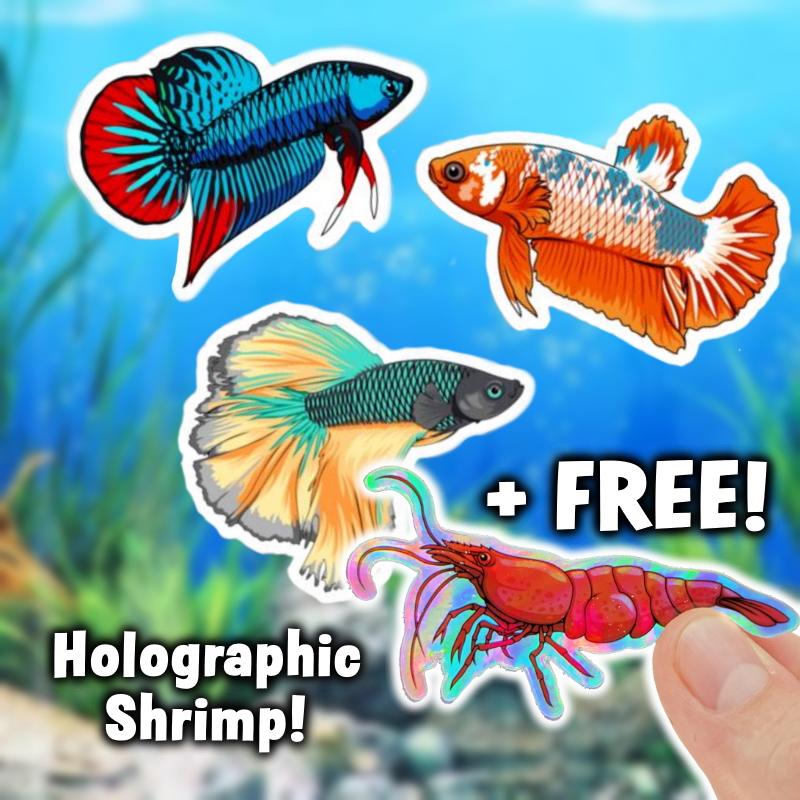 Betta fish sticker pack