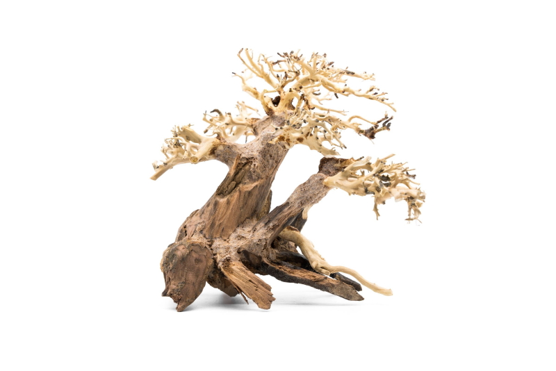 Branched Bonsai Tree