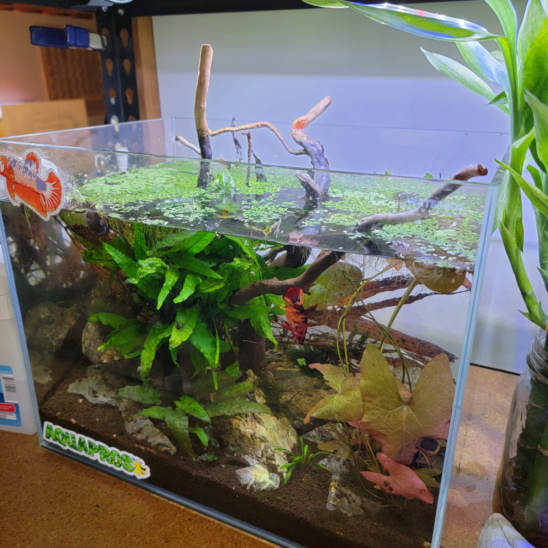 6 gallon waterbox aquarium