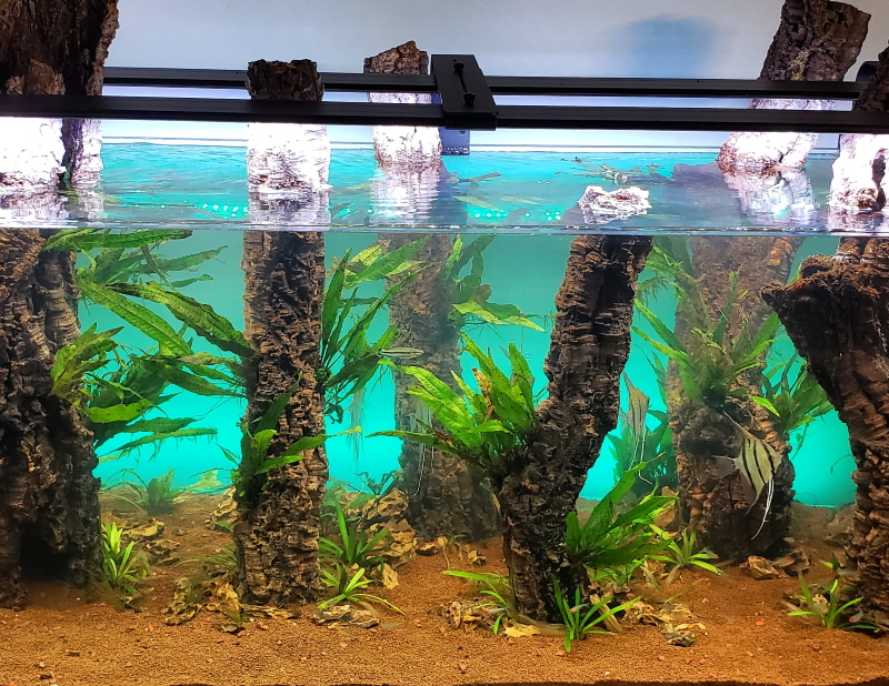 fish wont jump out of this tank