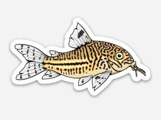 Cory Catfish Sticker