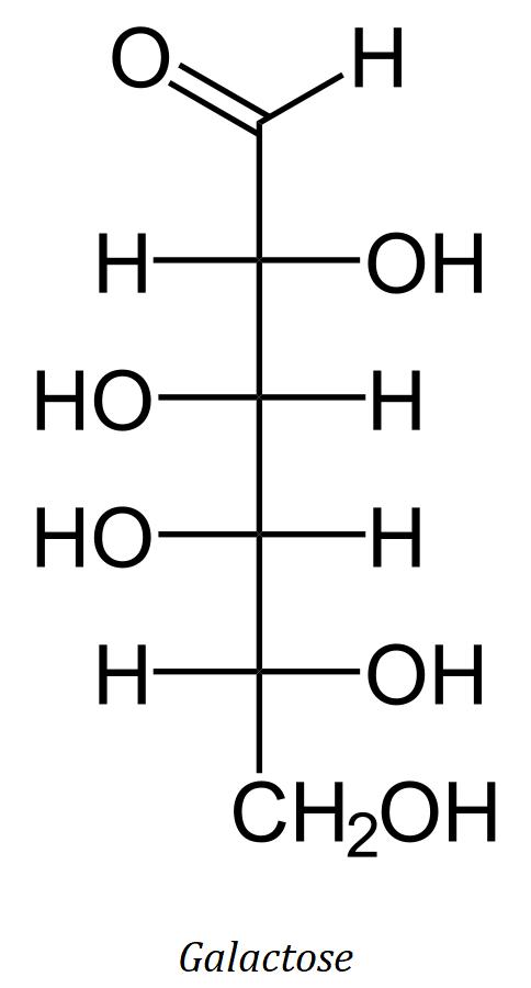 molécule de galactose, un glucide simple