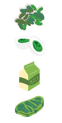 le rôle des protéines