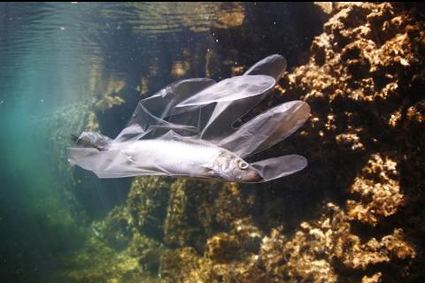pez dentro de guante de plástico
