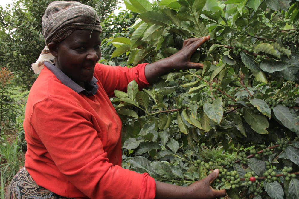 A woman inspecting her coffee farm