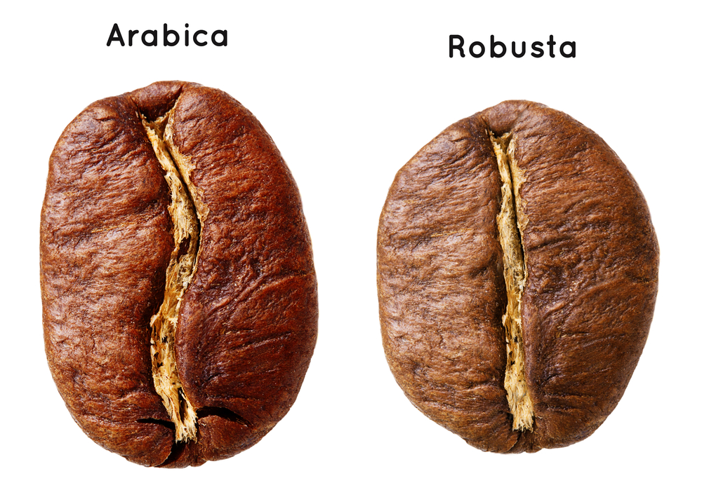Arabica and Arabica brans placed on a white background