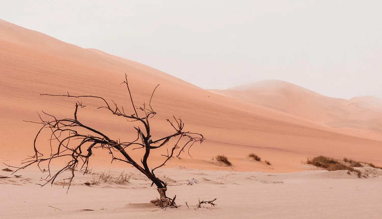 Foto de dunas de areia em deserto com árvore seca em primeiro plano, em alusão à desidratação no corpo e na pele.