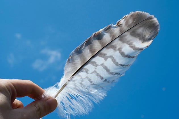 Em artigo sobre alergia e sensibilidade na pele, imagem mostra uma mão segurando uma pena branca com listras marrons em frente a céu azul.