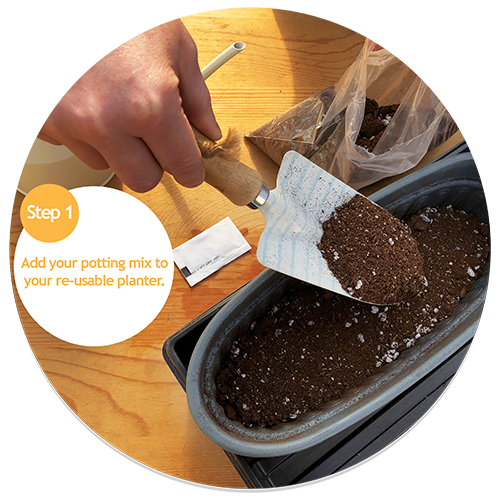 Add your potting mix to your planter. If you're doing this indoors then make sure to use a tray as things might get messy.