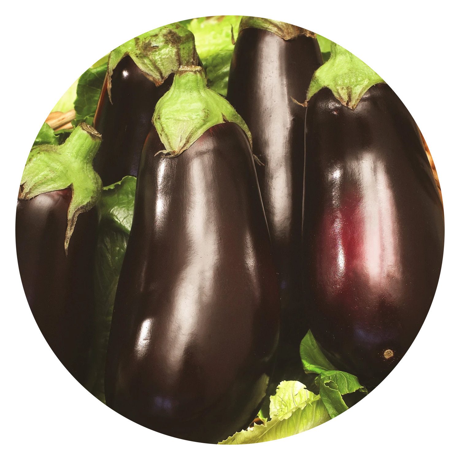 Heirloom Black Beauty Eggplant Seeds, link to product page.