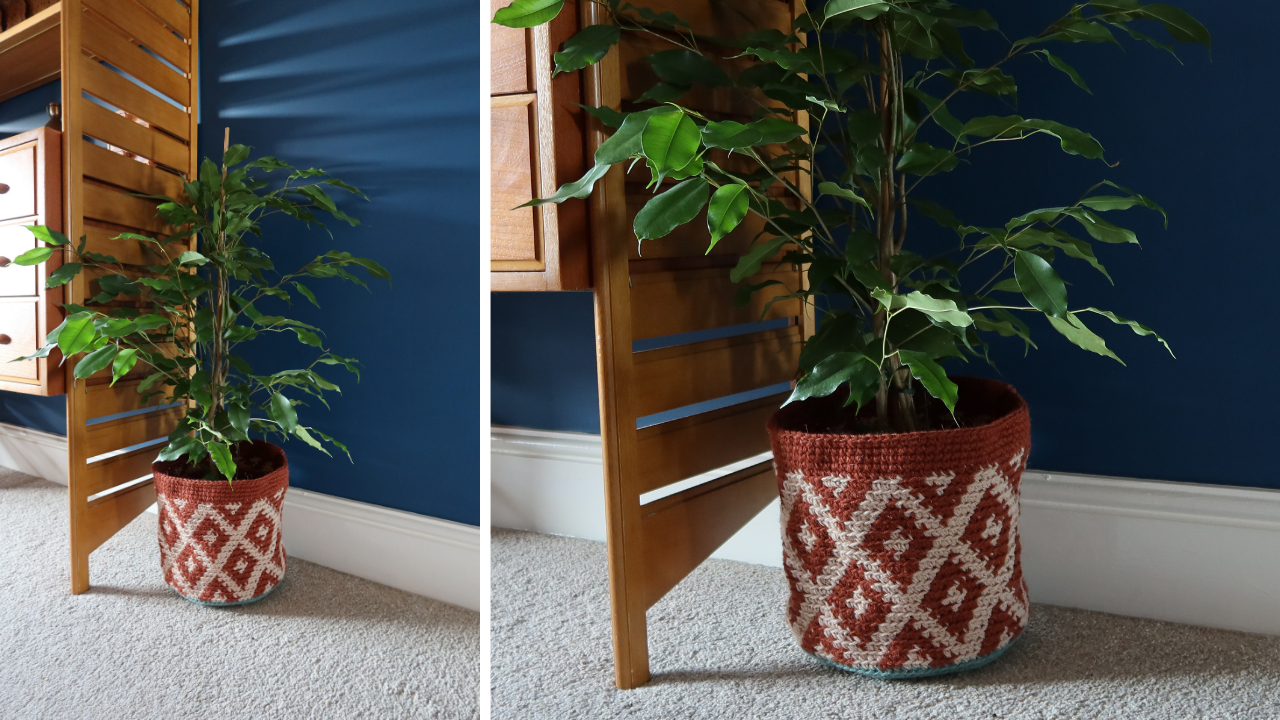 A crocheted plany pot with a plant in it, stood in fornt of wooden shelving and a dark blue wall.  The plant pot has a diamond motif and is crocheted in rust and a warm cream.