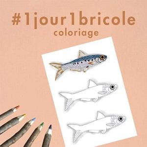Coloriage petits poissons
