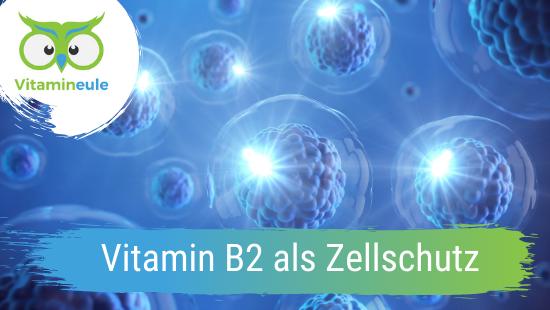 Vitamin B2 als Zellschutz für den menschlichen Organismus