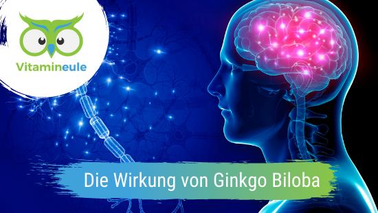 Die Wirkung von Ginkgo Biloba im menschlichen Körper