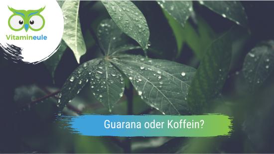 Was ist besser: Guarana oder Koffein?