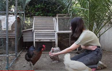 Comment j'ai appris des tours a mes poules / A vous de jouer !!