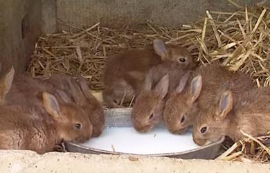 Les animaux de la ferme : le lapin