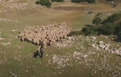 La montagne, le berger et les moutons