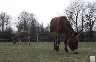 SANTÉ | L'alimentation de l'âne