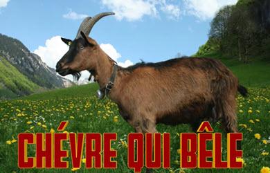Chèvre qui bêle - Cri de la chevre