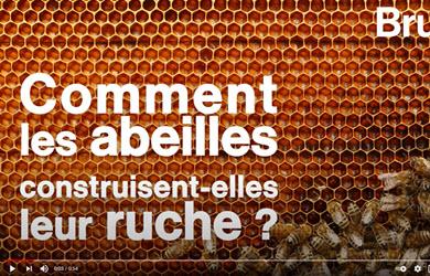Comment les abeilles construisent-elles leur ruche ?