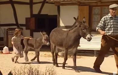 Les animaux de la ferme : L'âne
