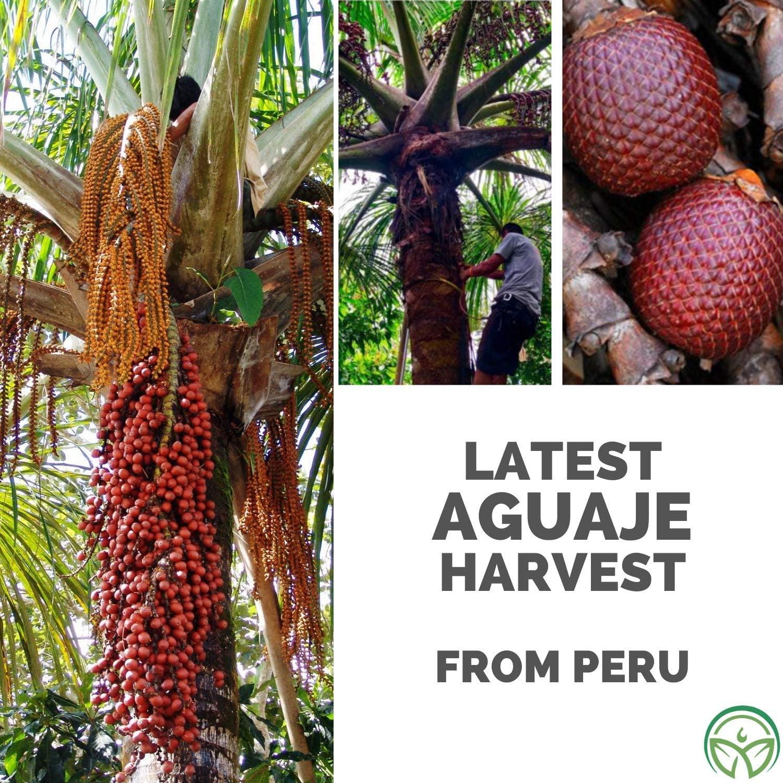 Aguaje from Peru