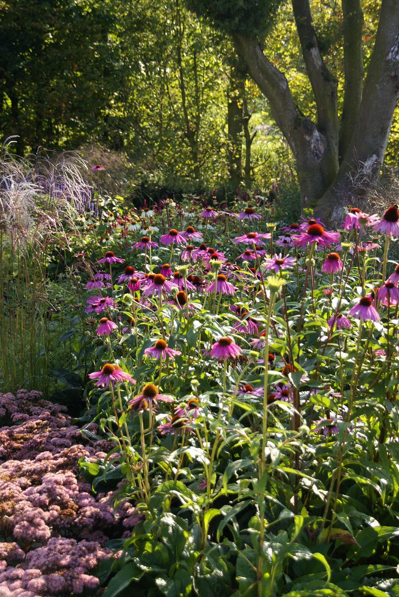 moderne wilde tuin
