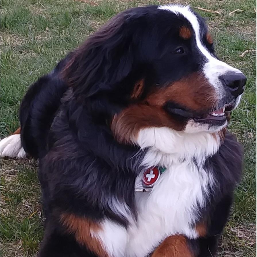https://spotonfence.com/blogs/customer-reviews/spoton-review-bernese-mountain-dog