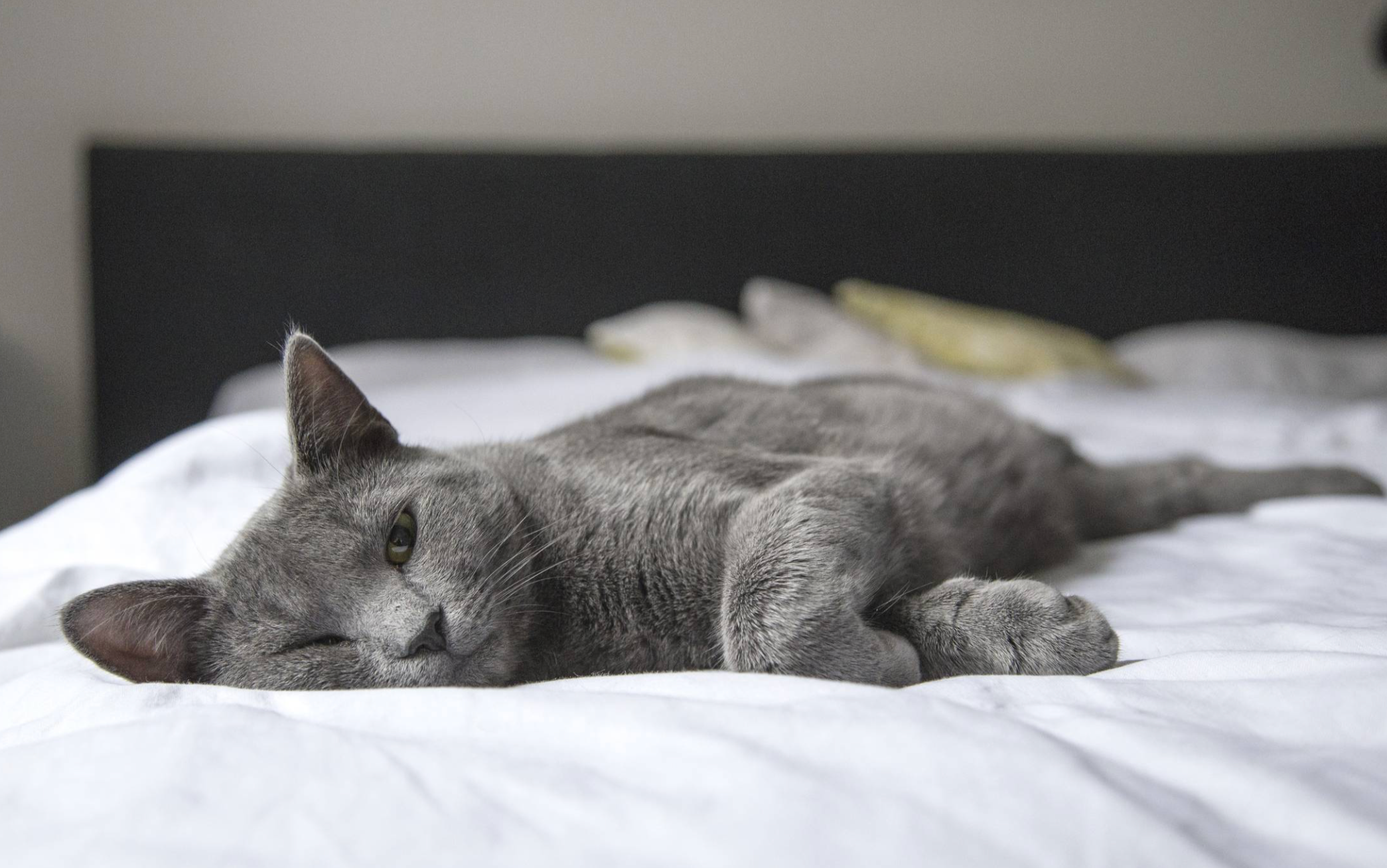 manage your cat;s joint health