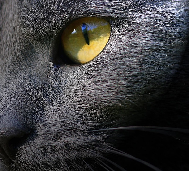 problems with vision within cats