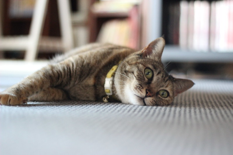 kidney function of cats