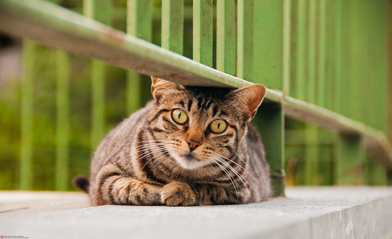eye discharge within cats