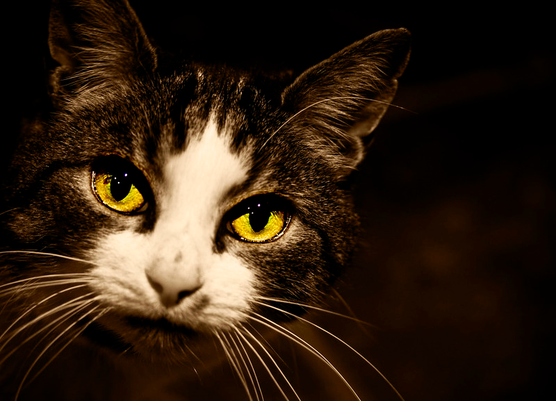 redness or swelling cat's eyes