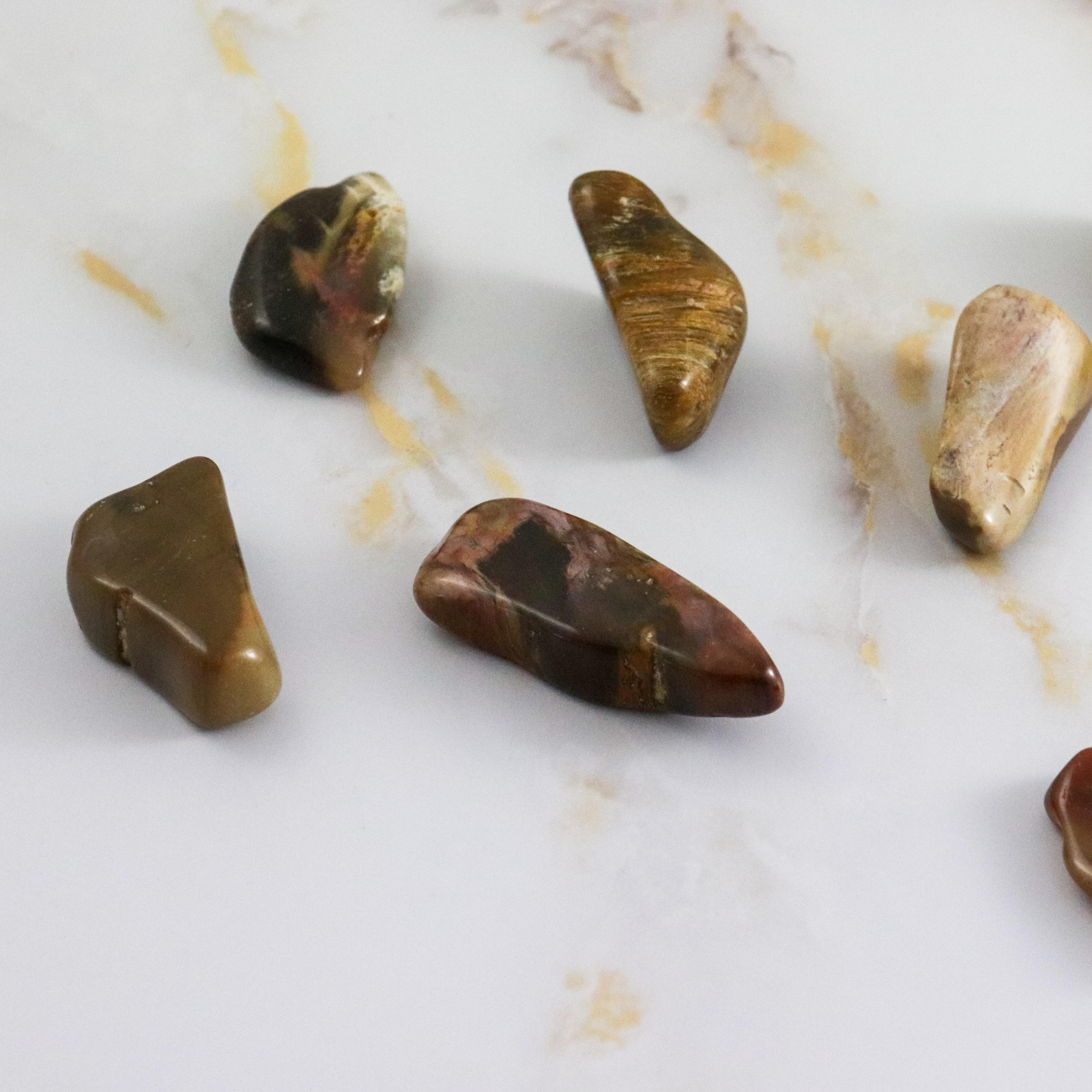 Pierre roulée bois fossile