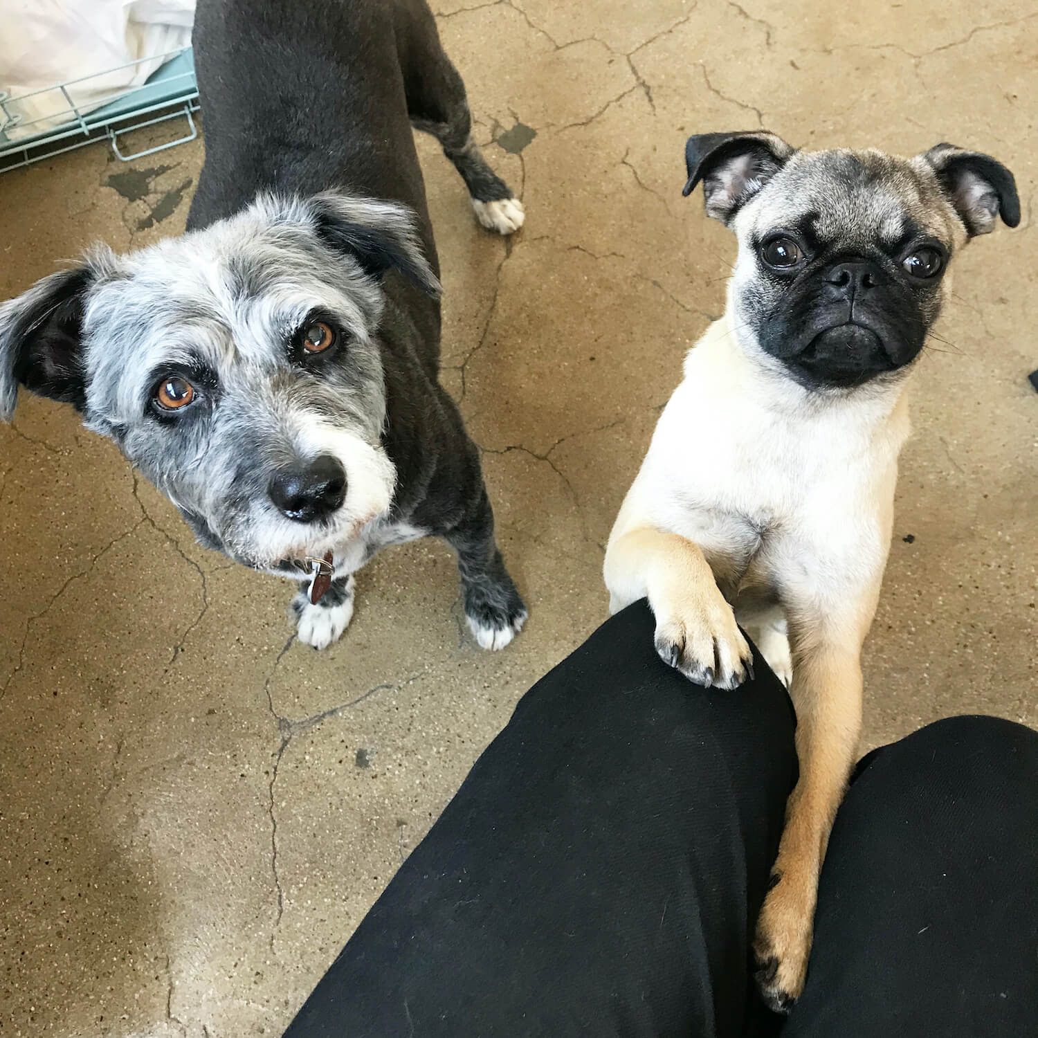 Thousand office dogs