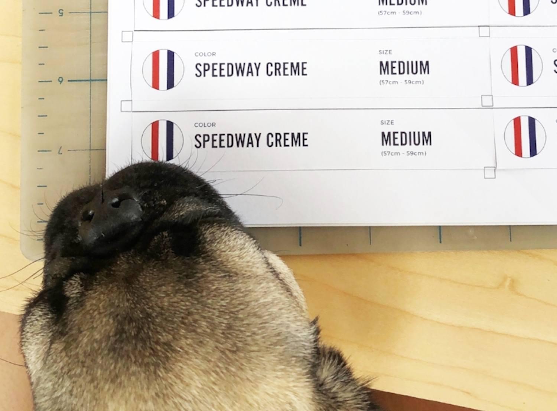 bike helmet labels