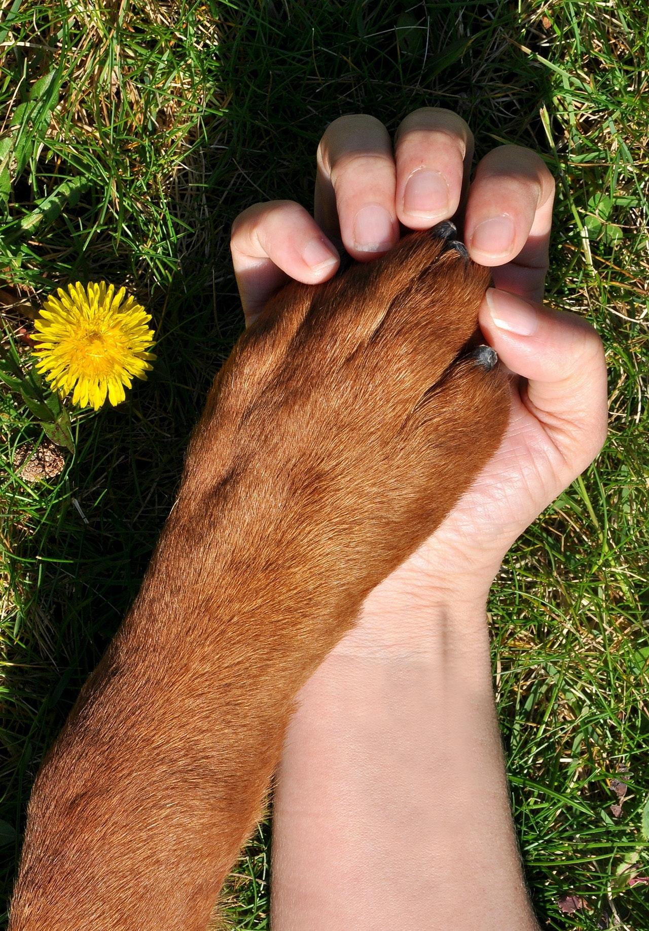 dog-nail-trimming-3
