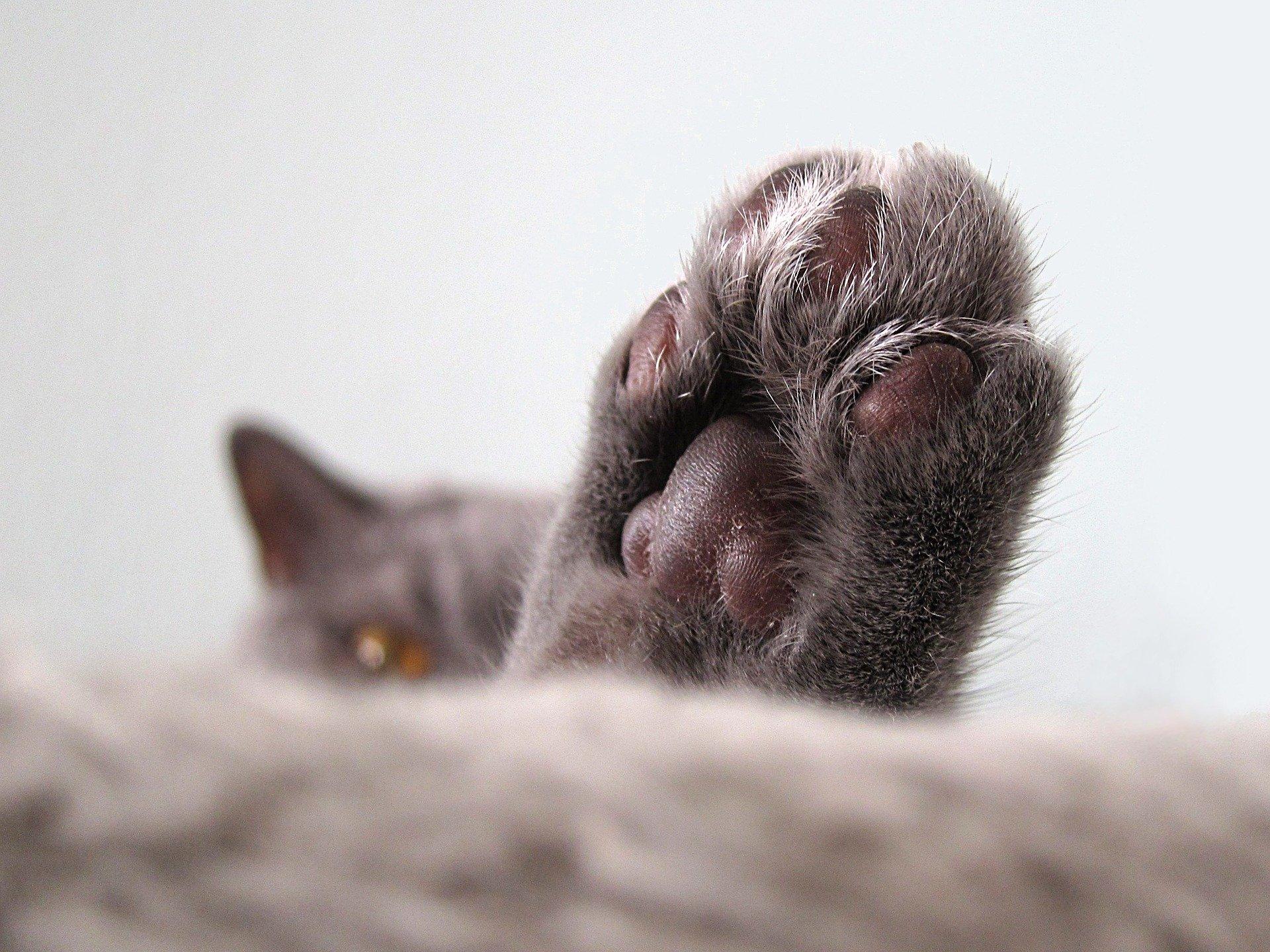 cat-nail-clipping-2