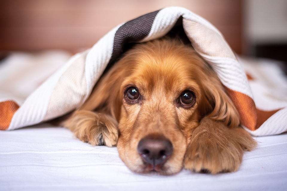 dog-bed-2