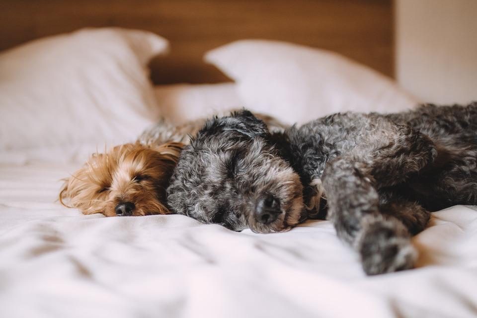 dog-bed-1